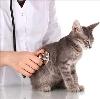 Ветеринарные клиники в Лабинске